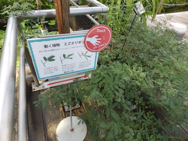 咲くやこの花館に大阪ボディケア整体スクールの講師が訪れました。