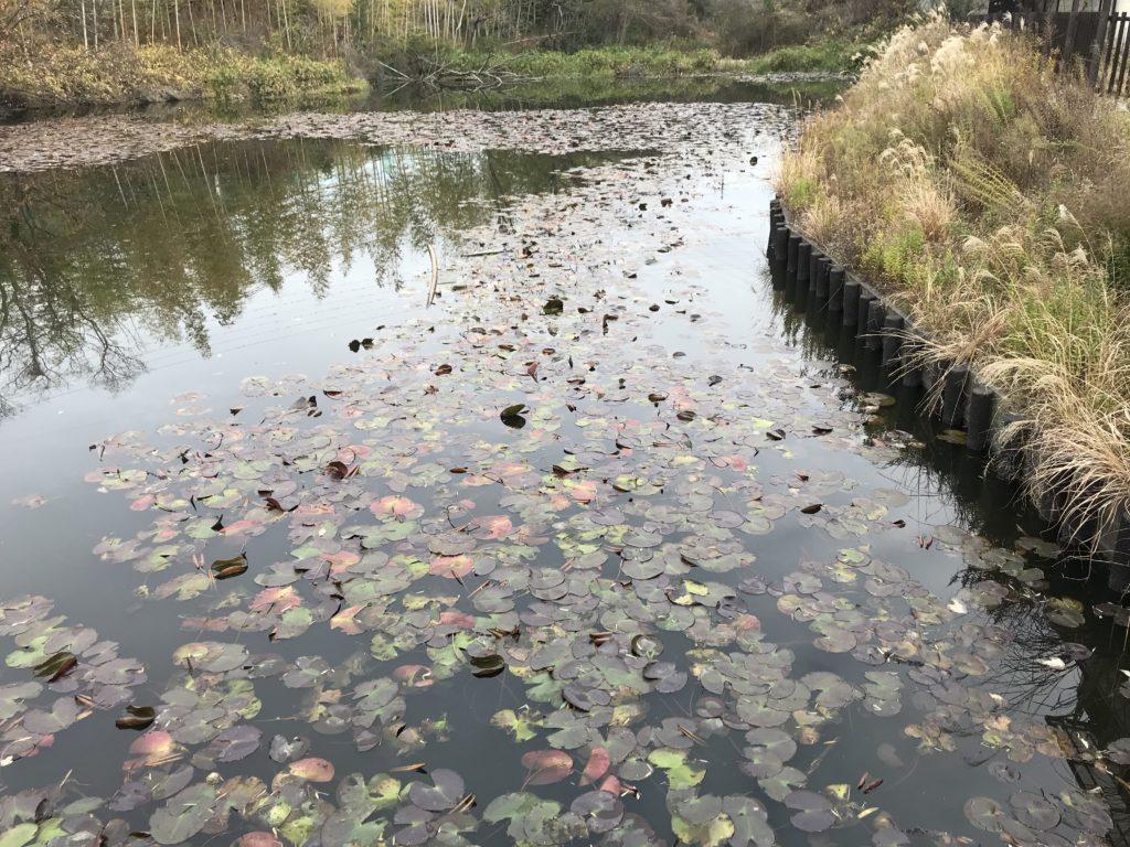 散歩中の池